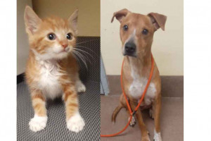 """Marmalade is the sweetest kitten ever! She needs a loving home!   Elmo is a two-year-old heartworm-negative neutered male. He says """"Come meet me!"""""""