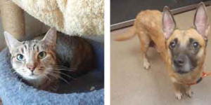 Tonya is a three year old spayed female. She was abandoned by her owner. you adopt our sweet May? Of course! She is six years old, heartworm negative, and would love to meet you.owners. She deserves a loving home! Can you help her?