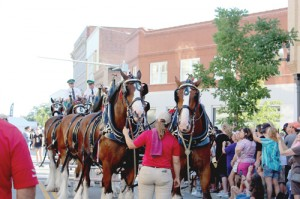 Budweiser Clydesdales made appearance at Florence After Five