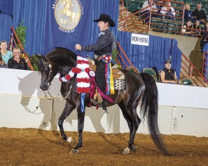 Palmetto Arabian horses excel at Region 12 Championships