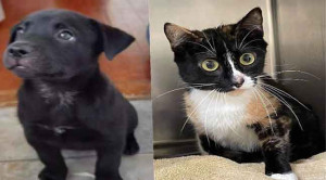 Stubbs is looking for a good home. Can you help him find it? Ten weeks old and full of puppy play, Stubbs will be your best friend. Firefly says now is the purr-fect time to adopt! Firefly will fill your home with fun and love. Come meet her.